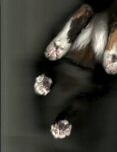 cat scan - Paw