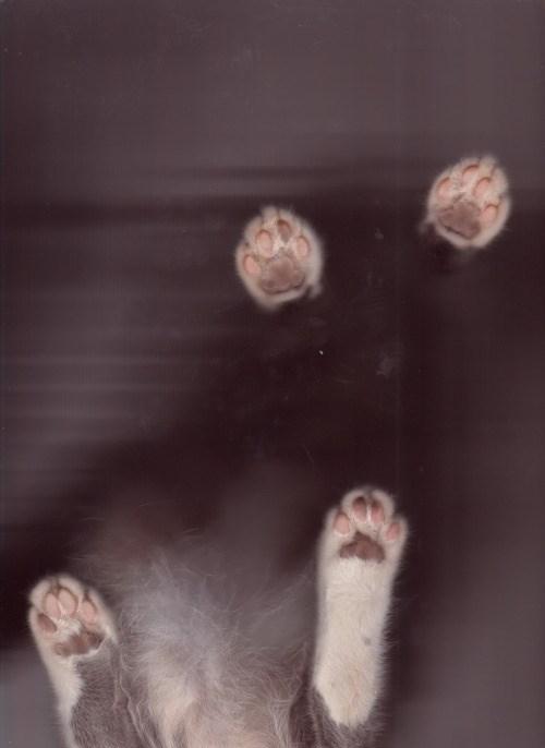 cat scan - Room