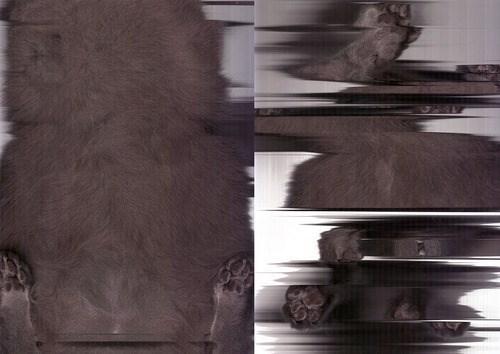 cat scan - Fur