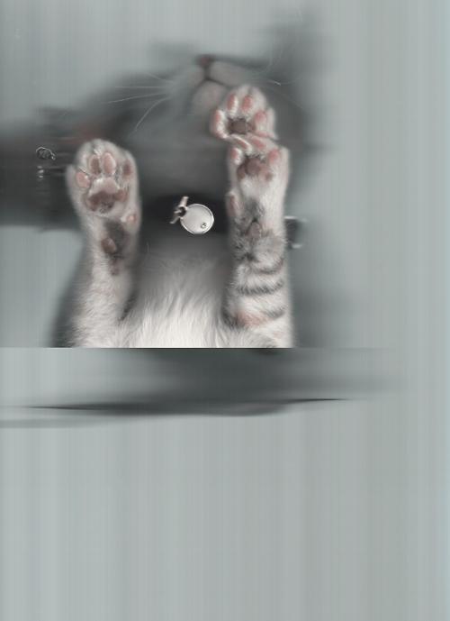 cat scan - Cat