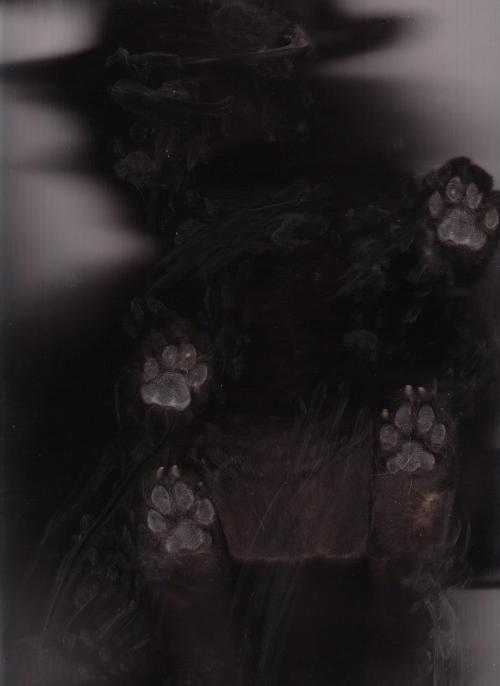 cat scan - Black