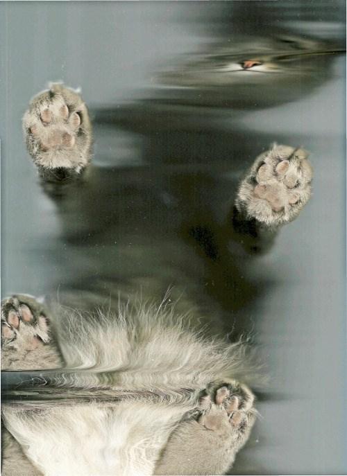 cat scan - Organism