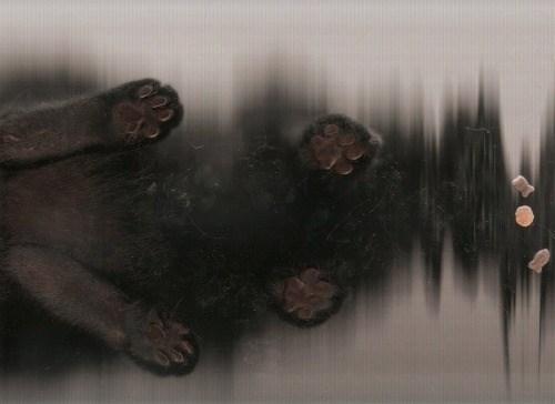 cat scan - Atmospheric phenomenon