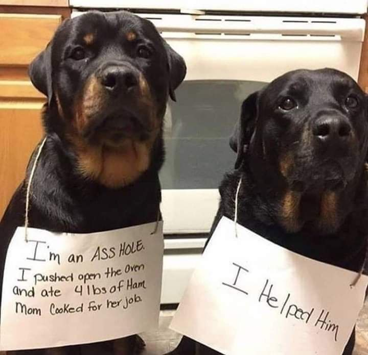 Dog - Im an Ass HoE I pushecd open the Oven and ate 4lbs of Ham mom Cooked for her joa I Helpad Him