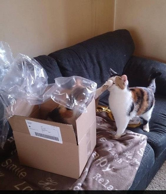 meme template of cats in a box with minor feline disagreement in progress