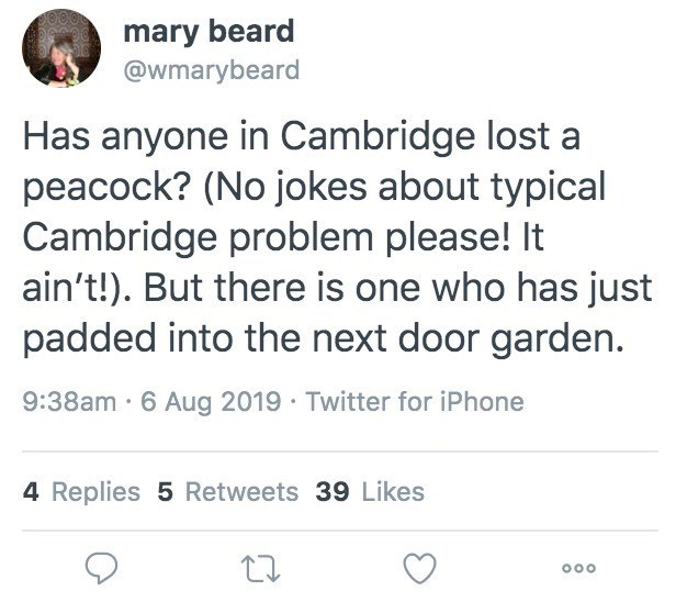 Text - mary beard @wmarybeard Has anyone in Cambridge lost a peacock? (No jokes about typical Cambridge problem please! It ain't!). But there is one who has just padded into the next door garden. 9:38am 6 Aug 2019 Twitter for iPhone 4 Replies 5 Retweets 39 Likes O0o