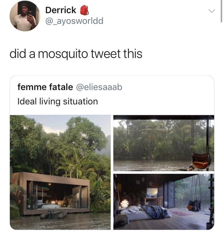 Property - Derrick @ayosworldd did a mosquito tweet this femme fatale @eliesaaab Ideal living situation
