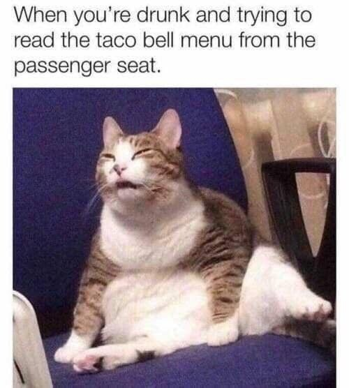 meme - Cat - When you're drunk and trying to read the taco bell menu from the passenger seat