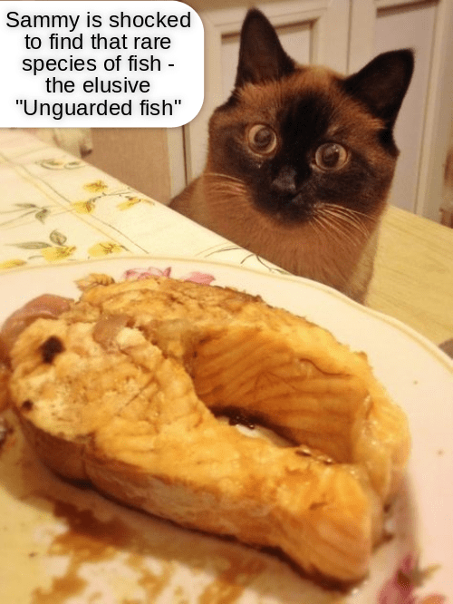 cat that is eyeballing that fish left unattended at the table which seems just too good to be true, but that has never stopped this cat before