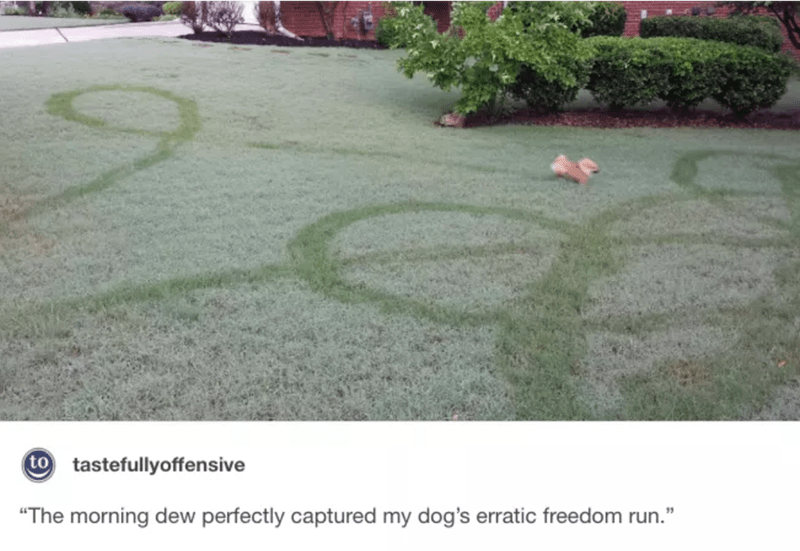 "Grass - to tastefullyoffensive ""The morning dew perfectly captured my dog's erratic freedom run."""