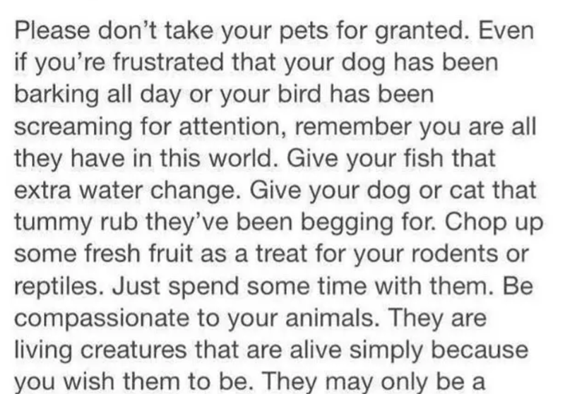 Text - Please don't take your pets for granted. Even if you're frustrated that your dog has been barking all day or your bird has been screaming for attention, remember you are all they have in this world. Give your fish that extra water change. Give your dog or cat that tummy rub they've been begging for. Chop up some fresh fruit as a treat for your rodents or reptiles. Just spend some time with them. Be compassionate to your animals. They are living creatures that are alive simply because you