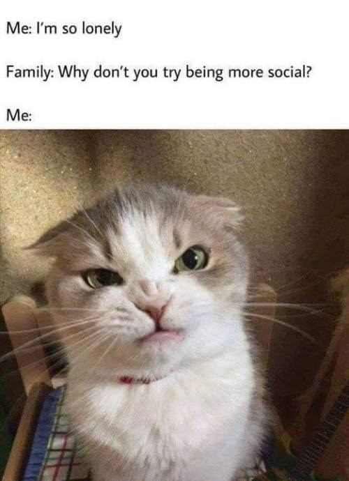 animal meme - Cat - Me: I'm so lonely Family: Why don't you try being more social? Me: HIA
