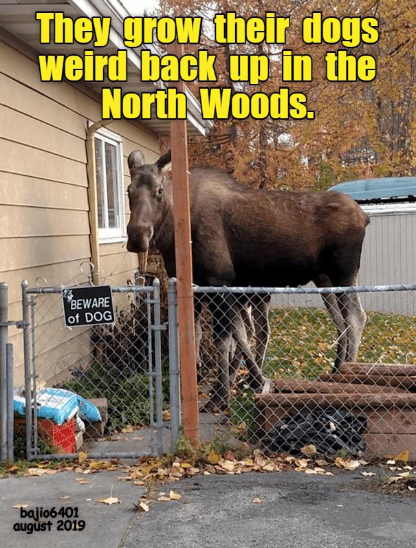 dog memes moose - 9342995456