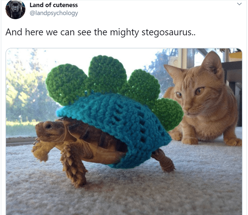 animal tweet - Tortoise - Land of cuteness @landpsychology And here we can see the mighty stegosaurus.. >