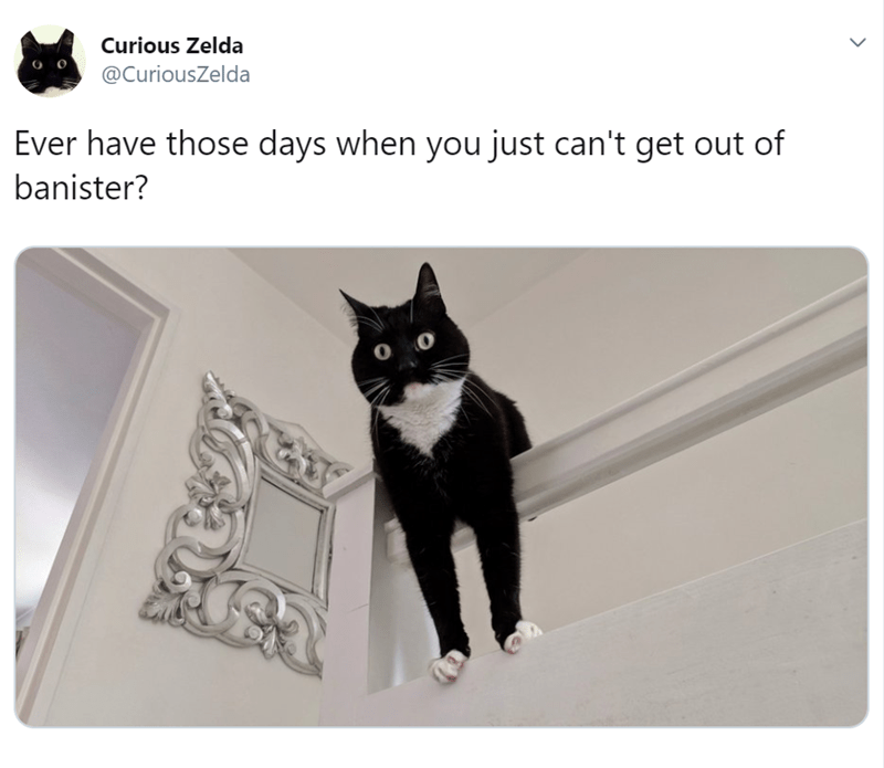 animal tweet - Cat - Curious Zelda @CuriousZelda Ever have those days when you just can't get out of banister? O O