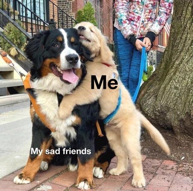 Wholesome animal meme - Dog - Me My sad friends