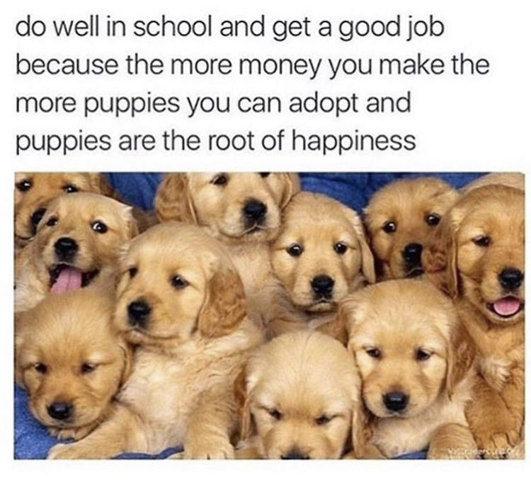 Wholesome animal meme - Vertebrate - do well in school and get a good job because the more money you make the more puppies you can adopt and puppies are the root of happiness