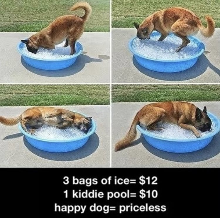 Wholesome animal meme - Canidae - 3 bags of ice= $12 1 kiddie pool- $10 happy dog priceless