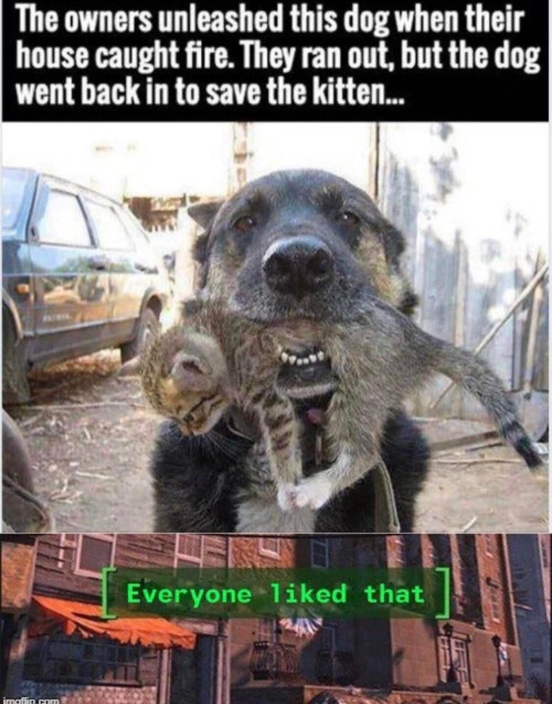 Wholesome animal meme - Canidae - The owners unleashed this dog when their |house caught fire. They ran out, but the dog| went back in to save the kitte... ELS Everyone 1iked that imaflin.com
