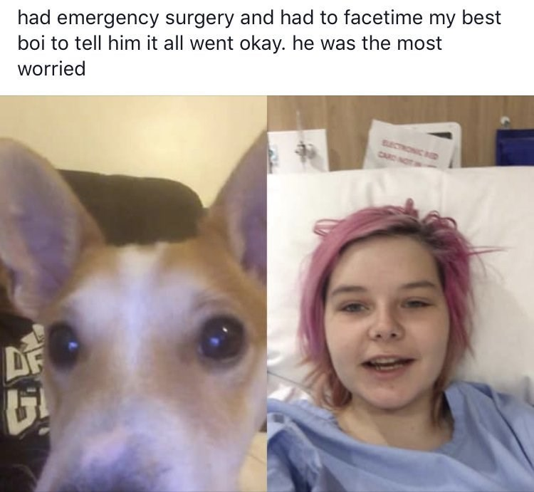 Wholesome animal meme - Face - had emergency surgery and had to facetime my best boi to tell him it all went okay. he was the most worried ECTRONIC D CAR NOT DF