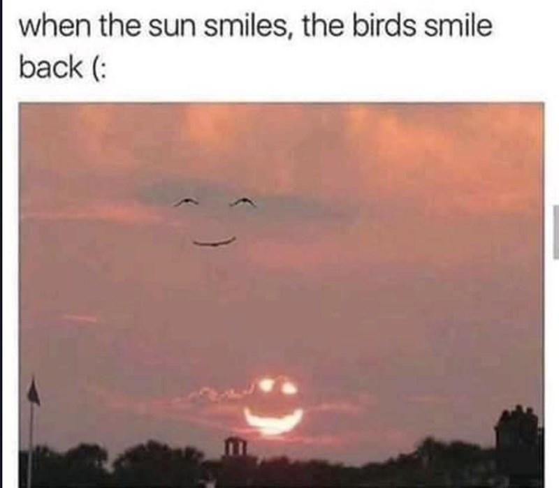 Wholesome animal meme - Sky - when the sun smiles, the birds smile back (