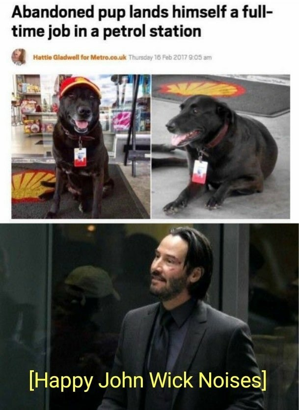 Wholesome animal meme - Dog - Abandoned pup lands himself a full- time job in a petrol station Hattle Gladwell for Metro.co.uk Thursday 16 Feb 2017 905 am Happy John Wick Noises]