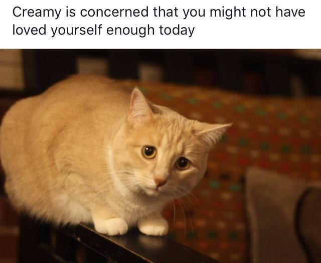 Wholesome animal meme - Cat - Creamy is concerned that you might not have loved yourself enough today