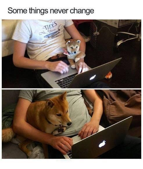 Wholesome animal meme - Adaptation - Some things never change TIDES Siton