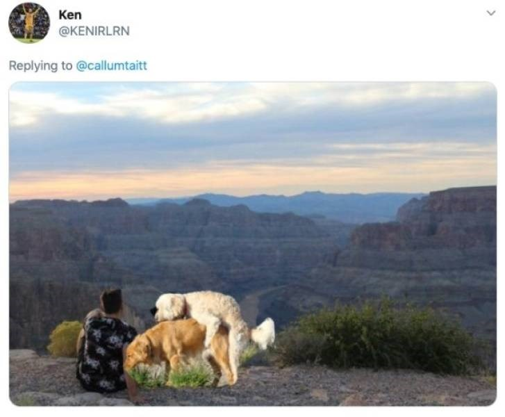 ex photoshop - Wildlife - Ken @KENIRLRN Replying to @callumtaitt