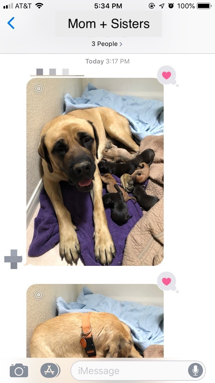 dog adoption - Dog - @ O 100% ll AT&T 5:34 PM Mom Sisters 3 People> Today 3:17 PM iMessage