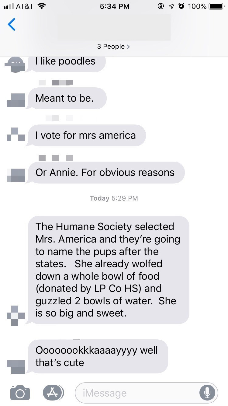 dog adoption - Text - @ O 100% ll AT&T 5:34 PM 3 People> Tlike poodles Meant to be. I vote for mrs america Or Annie. For obvious reasons Today 5:29 PM The Humane Society selected Mrs. America and they're going to name thee pups after the states. She already wolfed down a whole bowl of food (donated by LP Co HS) and guzzled 2 bowls of water. She is so big and sweet. Oooooookkkaaaayyyy well that's cute iMessage