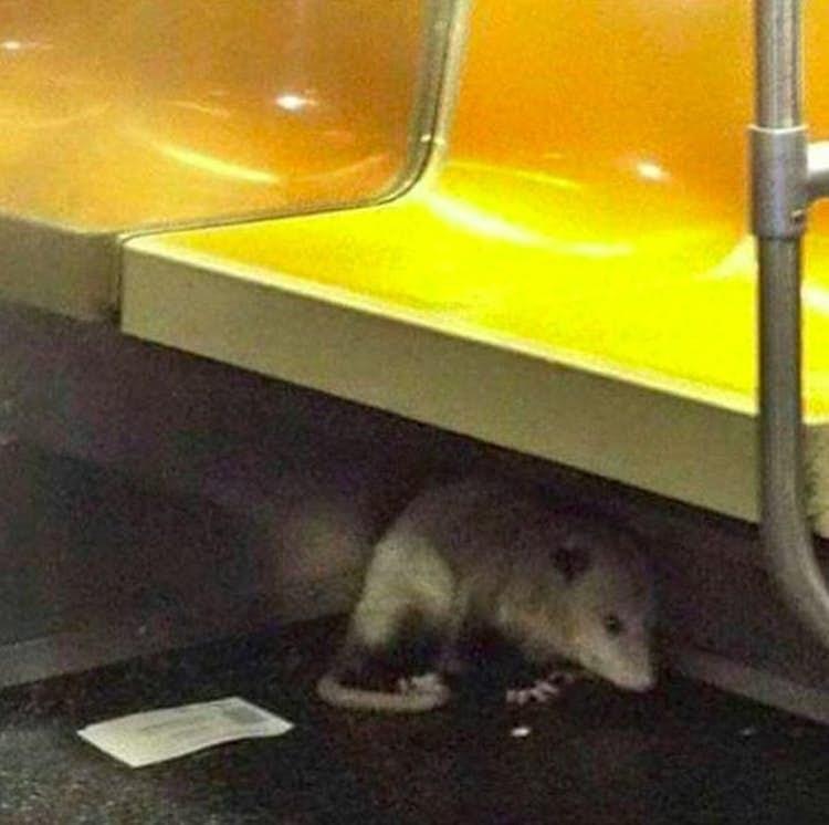 public transport - Rat