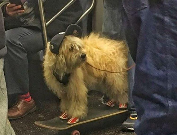 public transport - Mammal