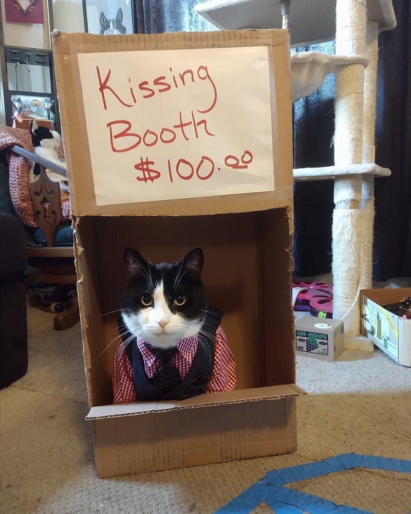Cat - Kissing Booth 100. BIG GRAPE