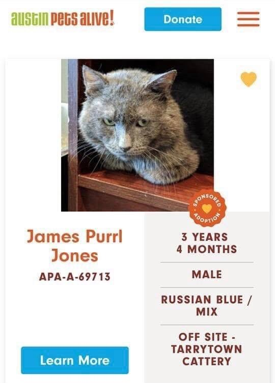 cats - Cat - austin PeGs auve! Donate YOOPTION James Purrl Jones 3 YEARS 4 MONTHS MALE APA-A-69713 RUSSIAN BLUE MIX OFF SITE TARRYTOWN CATTERY Learn More