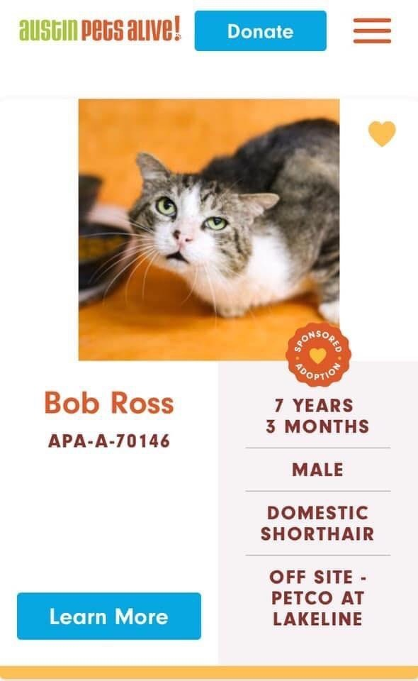cats - Cat - austin Pets alive! Donate BARSOUIE OPTIOT Bob Ross 7 YEARS 3 MONTHS APA-A-70146 MALE DOMESTIC SHORTHAIR OFF SITE PETCO AT Learn More LAKELINE