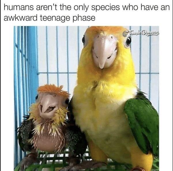 17 Bird Memes To Beak Your Interest Memebase Funny Memes