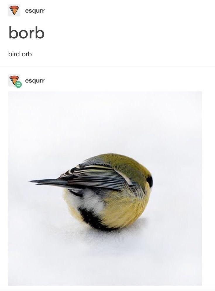 Bird - esqurr borb bird orb esqurr
