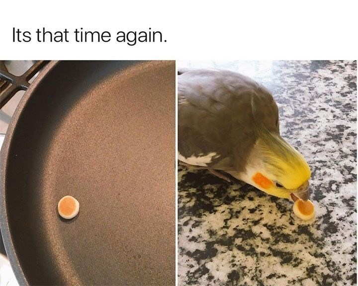 "Meme - ""It's that time again"""