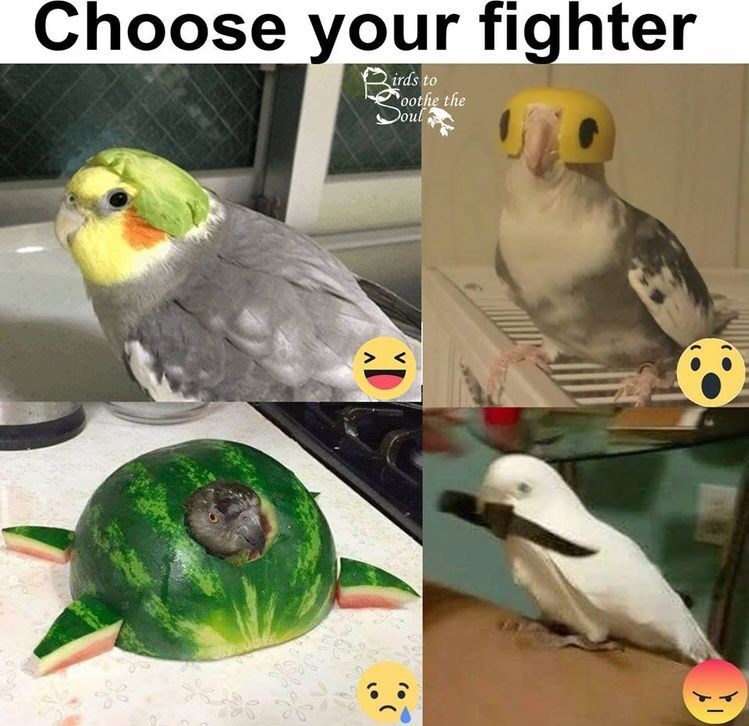 Bird - Choose your fighter irds to oothe the Doul D
