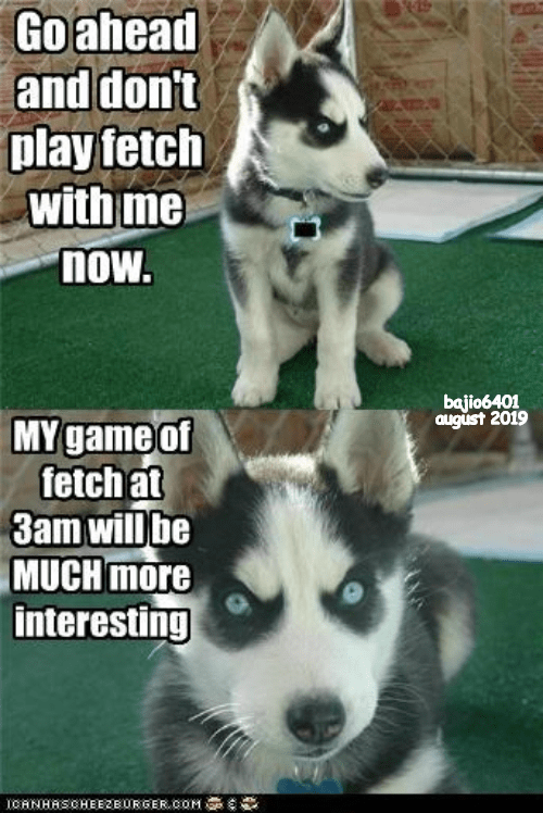 fetch dog memes husky up all night - 9343374080