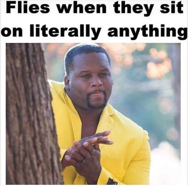 meme - Text - Flies when they sit on literally anything