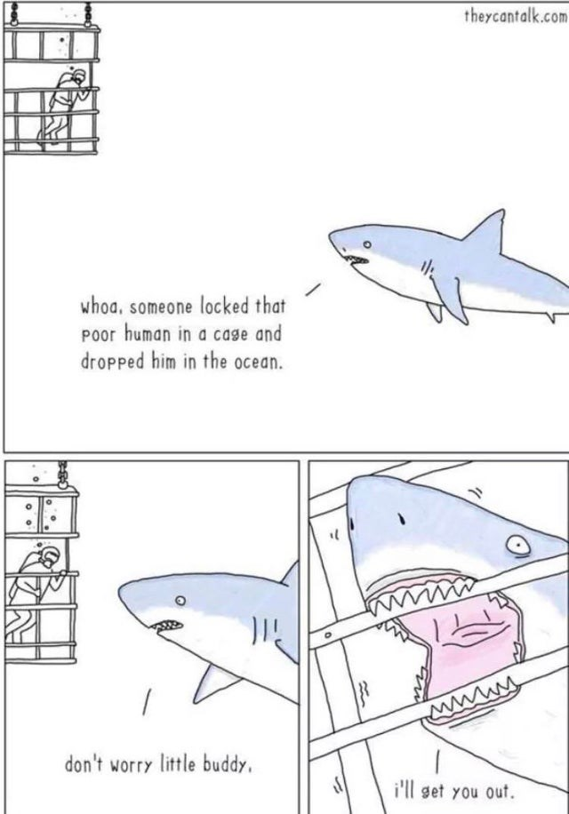 wholesome webcomic - Great white shark - theycantalk.com whoa, someone locked that POor human in a cage and dropped him in the ocean. wwww Wwwww don't worry little buddy i'll get you out
