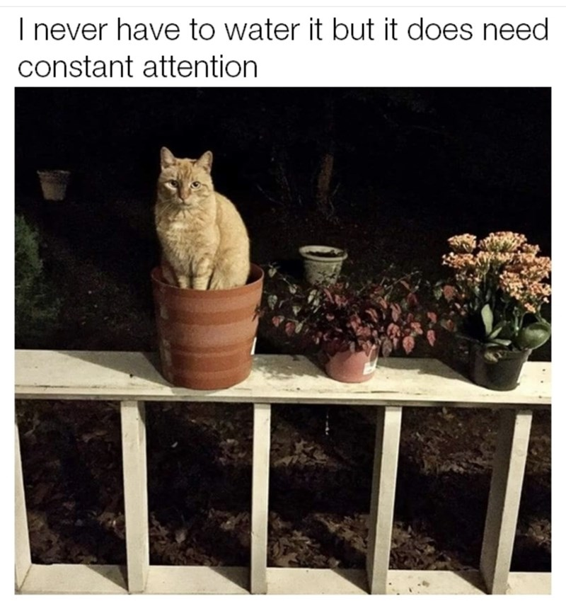 """Meme - """"I never have to water it but it does need constant attention"""""""