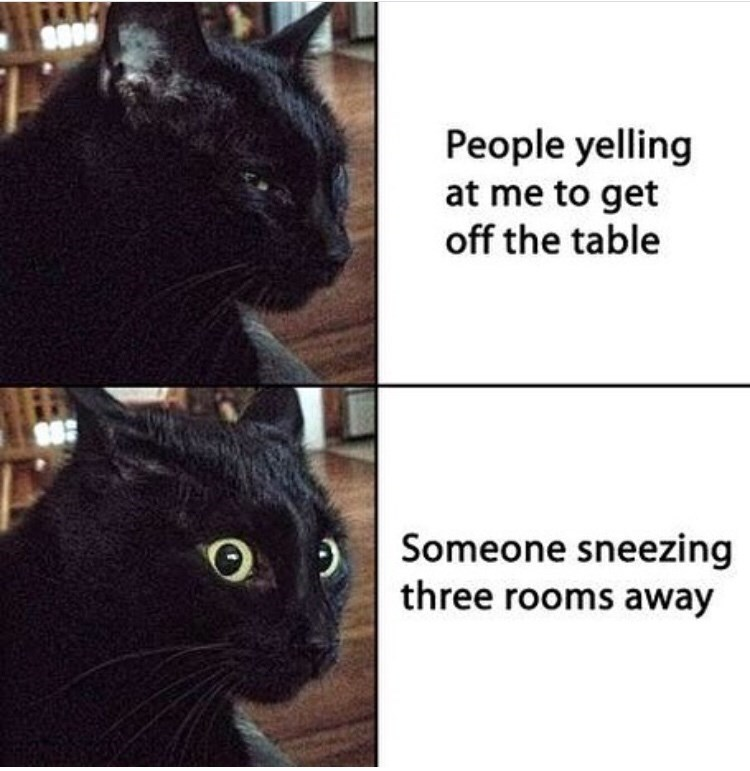 Cat - People yelling at me to get off the table Someone sneezing three rooms away
