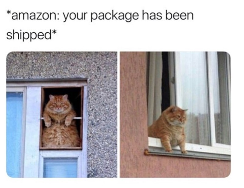 Cat - *amazon: your package has been shipped*