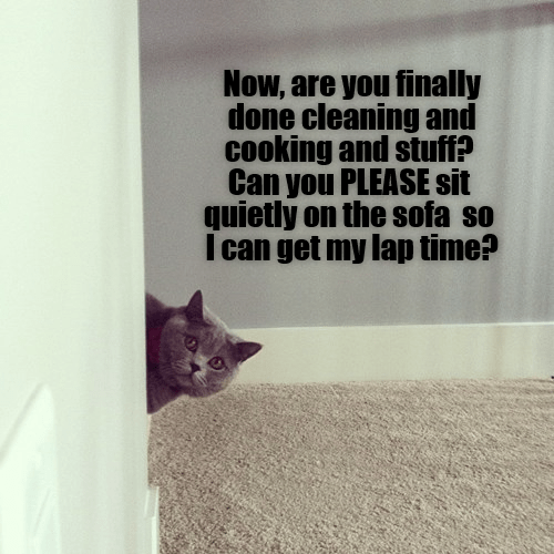 cat meme about cats scared of owners when they are cleaning
