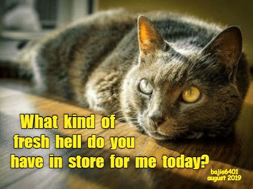 cat memes - 9343837184