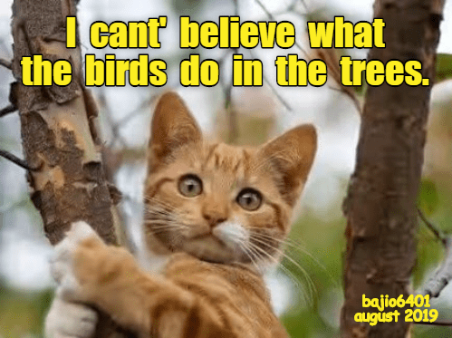 cat meme of a kitty climbing a tree and shocked at what the birds are doing there