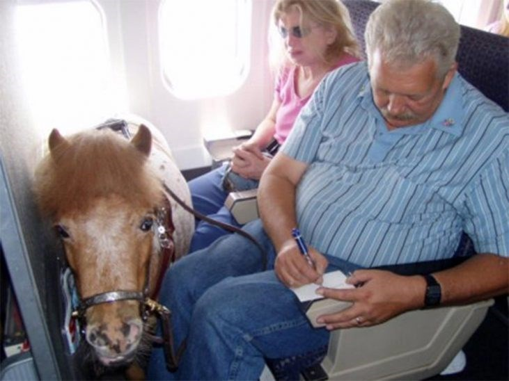 man and woman sitting in airplane with miniature horse in front of them